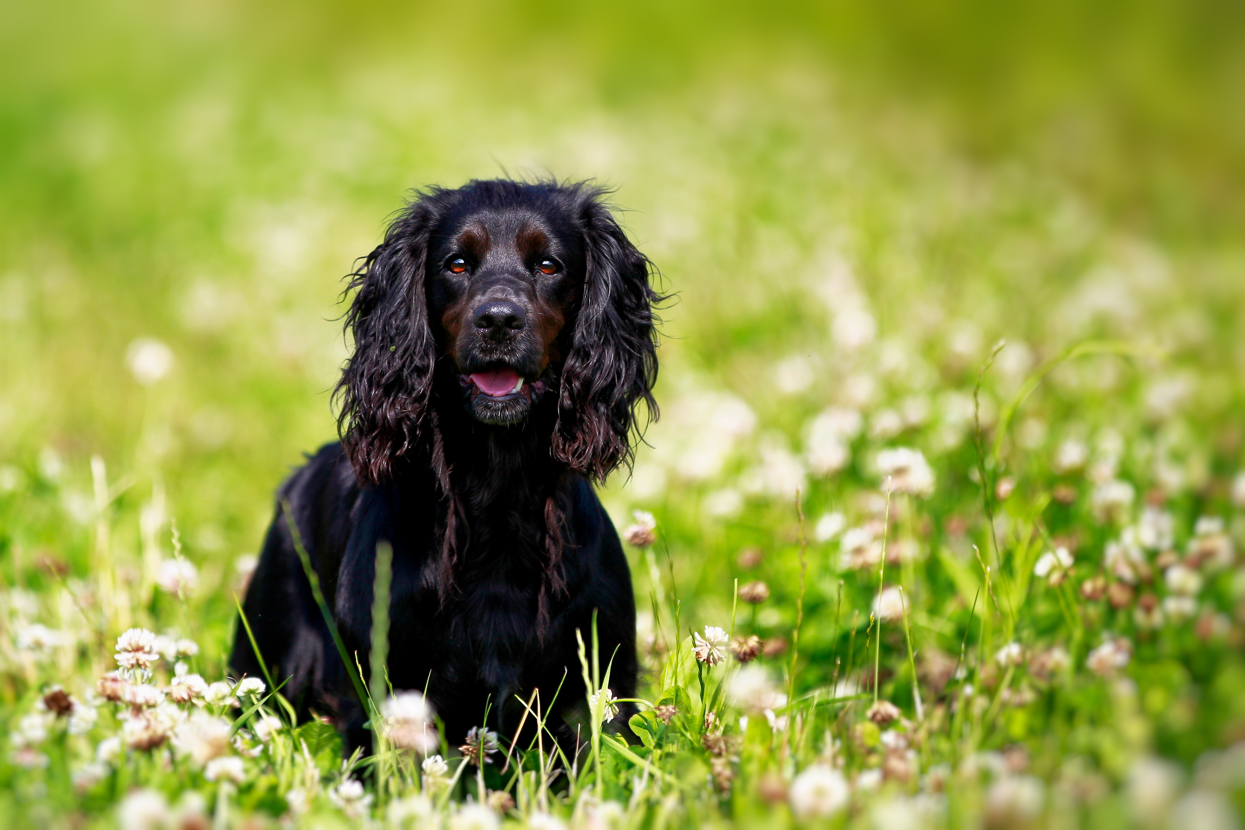 Lintbells Reveals Top Dog Friendly Hotels to Visit Ahead of May Bank Holiday