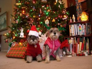 Pets Not Partners Bring More Christmas Cheer, According To New Survey